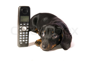 Black dog Lays with a black telephone on white background isolated