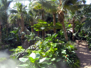 A beautiful park of tropical foiliage, indoors