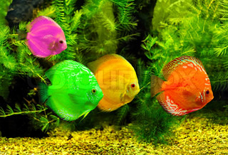 Fishes in different color in water