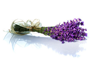 Lavender flowers isolated against a white background Purple summer flowers