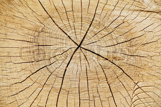 Den årlige ringe af et snit træstamme i en skov