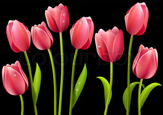 Set of pink tulip flowers with leaves