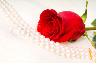 Beautiful red rose and pearl necklace lay on white to fur ...