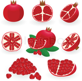 Vector illustration of pomegranate
