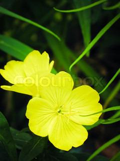 Grünes Gras und gelben Blüten