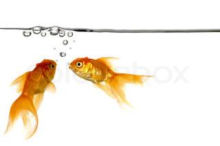 Vandlinie med små luftbobler og guldfisk