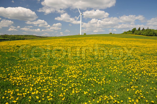 Wind turbine on a meadow with yellow flowers