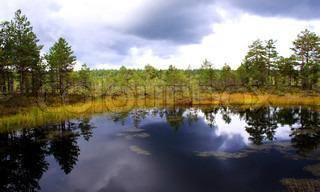 Lille sump søen ved overskyet dag og træer