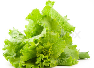 lettuce leaves on a white background