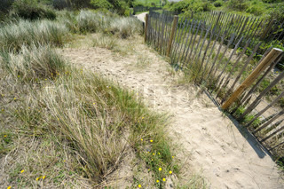 An old zigzagging picket fence crosses over sand dunes, covered in sea oats, along the Oostende beach, Flemish Region, Belgium Useful file for your adventure, ecology and travel brochure