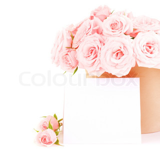 Pot of pink fresh roses with blank card, beautiful flowers isolated on white background