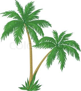 Vektor , palmer med grønne blade på hvid baggrund