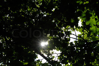 Sun, shine, tree, branch, foliage, green, through