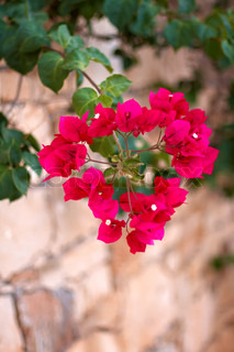 small red flowers in the shape of a heart on a stone wall background