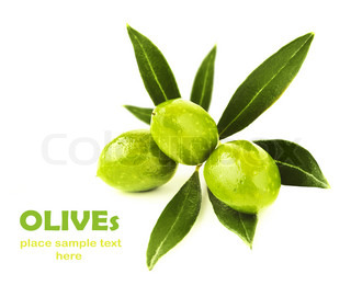 Fresh green olive branch isolated on white background, seasonal healthy fruit, food ingredient, harvest