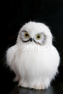 white toy owl on the black background