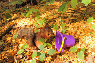 Red squirrel eats in the autumn forest