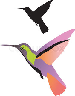 Vector color illustration of hummingbirds