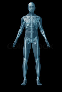 The abstract image of human anatomy through a translucent surface