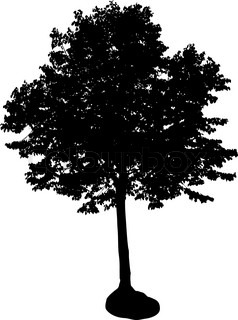 silhouette of isolated tree