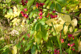 green and yellow leaves and pink berries in forest, autumn background
