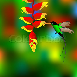 Flower with colibri.Vector Illustration.