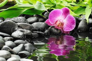 spa-koncept med Zen sten og orkidé