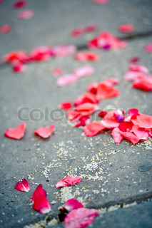 Sparse pink rose petals on asphalt after wedding ceremony, vertical image