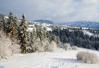 winter calm mountain landscape with rime and snow covered spruce trees and ski slope