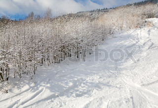winter calm mountain landscape with rime and snow covered forest and ski slope
