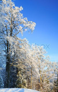 winter calm mountain landscape with rime and snow covered trees in front