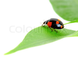 The small bug on a leaf of a plant