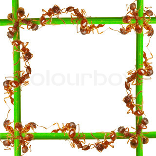 Ants on a green grass On a white background