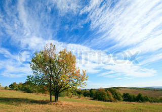 lonely autumn tree on sky with some cirrus clouds background (and cross under tree crown)