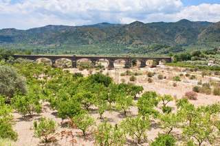 citrous garden and bridge in dry riverbed, Sicily