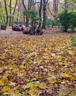 Ground surface of the autumnal park with yellow fall foliage and trees behind