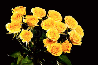 Beautiful bouquet of yellow roses isolated on black background