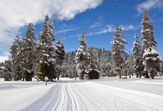 Landscape with x-country ski trail, snow and winter forest