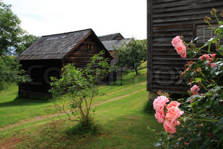 Old timber house in norway with pink roses in front