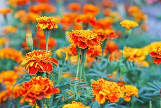 Billede af 'bokeh, farverige, Georgina'