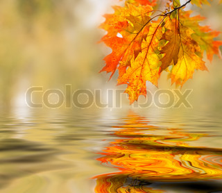 Bright farvede blade på grenene i efteråret skoven