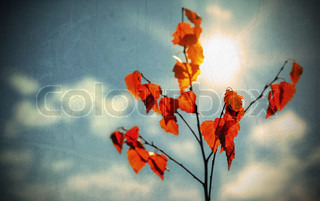 Grunge autumnbackground with dry red leaves