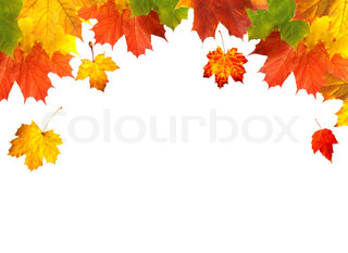 Autumn card of bright multicolor leaves