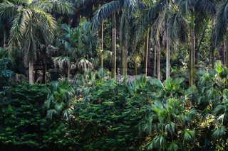 tropical forest with beautiful palm trees