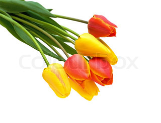 a bouquet of red and yellow tulips on a white background