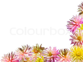 Pink - gule Dahlia blomster sæt hjørne frame ( isoleret på hvid)