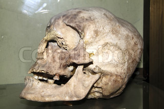 model of the human skull background or texture