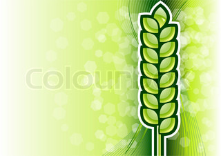 green corn on the background