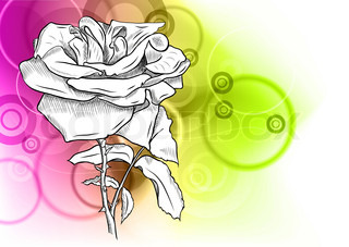 white rose on the abstract background