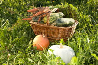 Wattled basket with vegetable marrows on a green grass